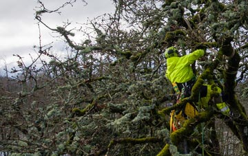 experienced Aberdeen City arborists are needed