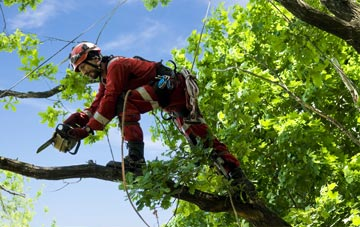 find trusted rated Aberdeen City tree surgeons