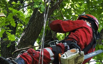 hiring professional Aberdeen City tree surgeons