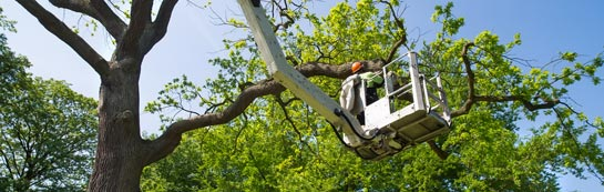 Aberdeen City tree surgery services