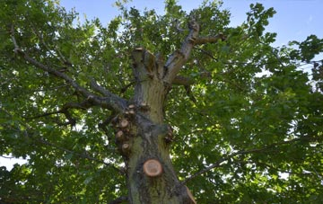 what is Aberdeen City tree surgery?